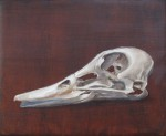 Duck_Skull