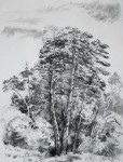 Scots_pine_forest
