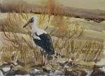 White_stork_in_the_field