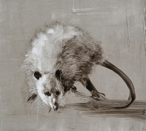 Opossum-22,5x25cm-oil on plastic sheet-2015